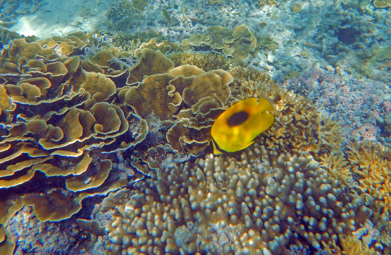 Snorkeling trips Gili Nanggu